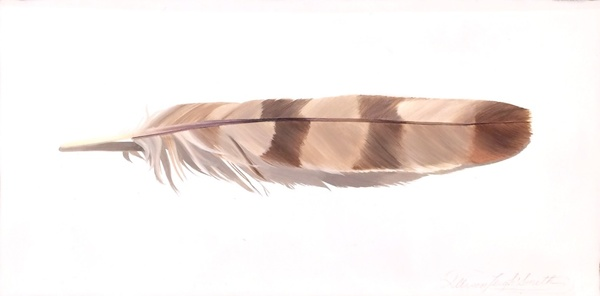 Coopers Hawk Feather - Allison Leigh Smith