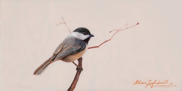 Black Capped Chickadee - Allison Leigh Smith